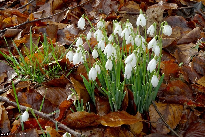 January 2018 - early signs of Spring